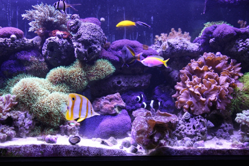 Salt Water Reef Aquarium:  A Special Kind of Real Estate! |Spruce Grove Stony Plain Parkland County Real Estate | Barry Twynam