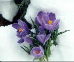 Spring Run-off | Spruce Grove Stony Plain Parkland County Real Estate | Barry Twynam