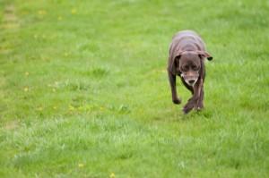 Citizen Canine- Off-Leash Dog Parks in Spruce Grove   Spruce Grove Stony Plain Parkland County Real Estate   Barry Twynam