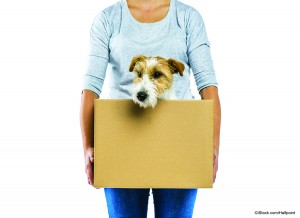 Tips for Moving to a New Home With Pets | Spruce Grove Stony Plain Parkland County real estate | Barry Twynam